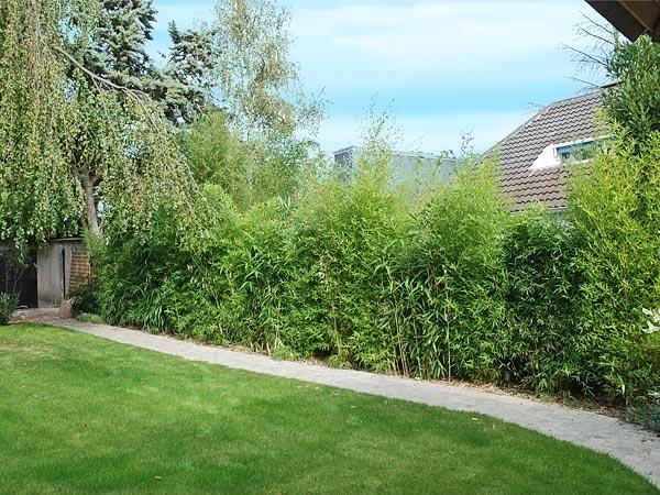 Amenagement jardin bambou - Maison François Fabie