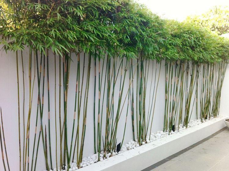 Bambou decoratif exterieur - Maison François Fabie